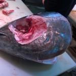 Tête de thon